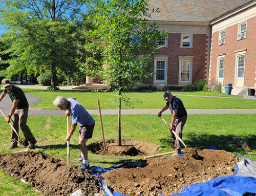 Sustainable Saratoga plants 3 large-growing shade trees at SPAC