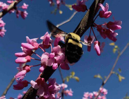 Meet the Bumblebees