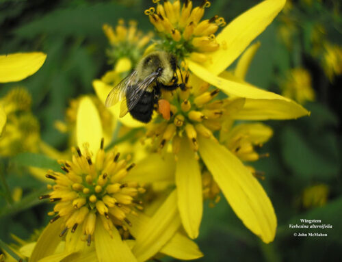 Growing Native Species for Pollinators Through the Year